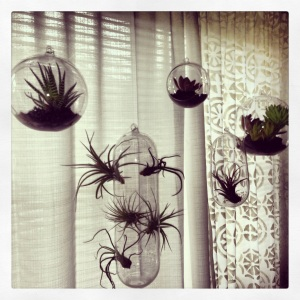 Beautiful Succulents and Air Plants